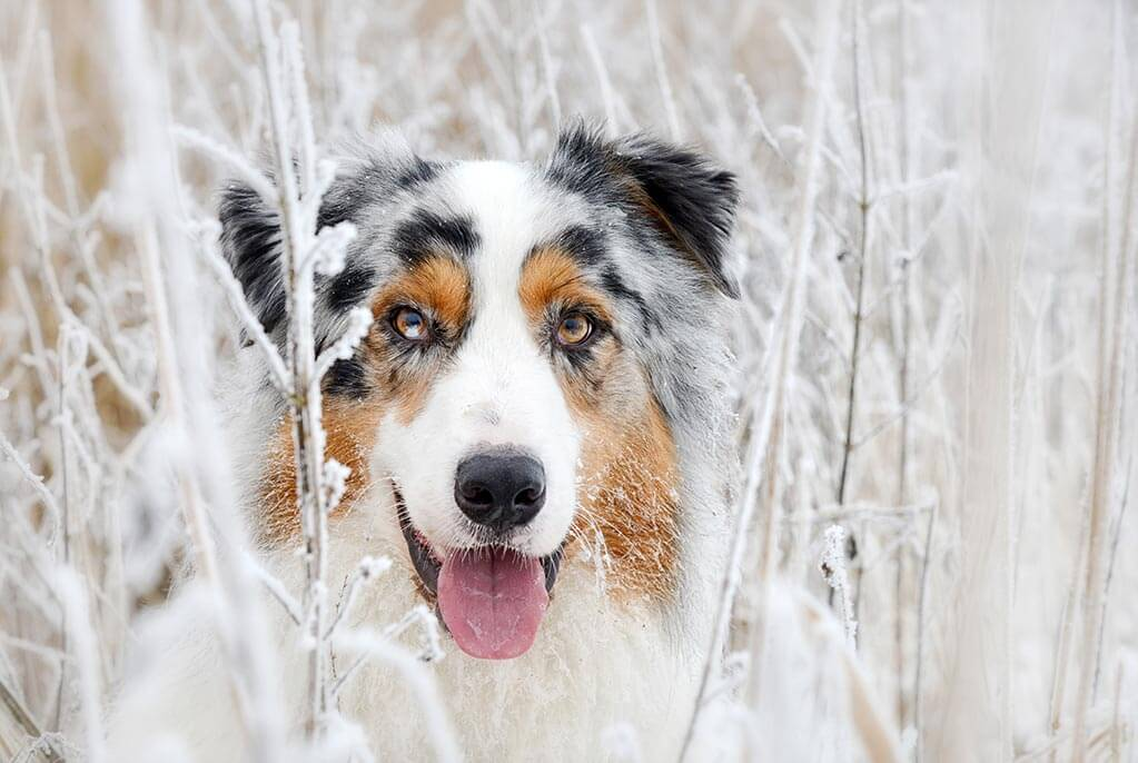 fellpflege-im-winter